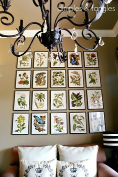 Dimples and Tangles: Botanical Gallery Wall