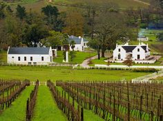 Gorgeous Vineyards Across the Globe : Condé Nast Traveler Visit South Africa, Cape Town South Africa, South Afrika, South African Wine, Cape Dutch, Dutch House, Dutch Colonial, Wonderful Places, Vineyard
