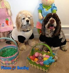 10 Spring Fling Easter Activities For Dogs - Fidose of Reality
