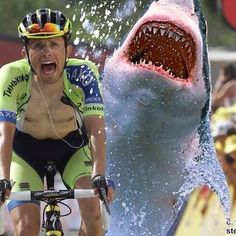 AmazeWall @AmazeWall TourDeWall Update: Posted by @andrea84c #ciclismo #squalo #tdf #sicilia #spettacolo #bravo #majka #pirenei pic.twitter.com/IquqTXIYzO Cycling Memes, Pro Cycling, Cycle Of Life, Life Is Like, Funny Moments, Bicycle, Bike Stuff, Twitter, Biking