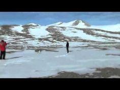 Existential Crisis of A Penguin - Werner Herzog Werner Herzog, Existential Crisis, End Of The World, Penguins, Youtube, Travel, Viajes, Penguin, Destinations