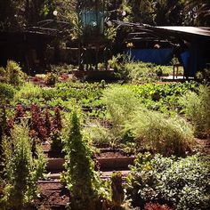 DF: Huerto Roma Verde urban farm right in the middle of Mexico City is becoming a community hub