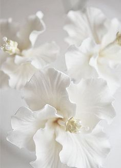 Shades of White All White, Pure White, White Flowers, Beautiful Flowers, Beautiful Things, White Peonies, Purple Roses, Deco Floral, White Aesthetic