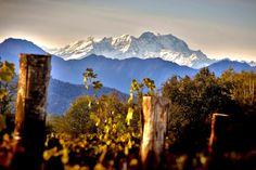 È nell'Alto Piemonte dei grandi vini e precisamente a Ghemme, in provincia di Novara, che si trova l'azienda Torraccia del Piantavigna. http://www.excantia.com/produttori/torraccia-del-piantavigna/