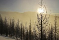 Thanks for Your Interest in Capture Black Forest, North West, Wilderness, Acre, Trees, Sun, Outdoor, Outdoors, Mornings