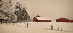 Red barns in the snow