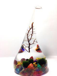 Marimo Terrarium Aquarium of the Rainbow Sea  on Etsy, $20.00