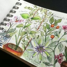 Watercolor garden journal entry, Tisha Sheldon