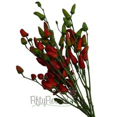 Chili Pepper Available October-December