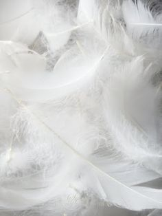 Home Inspiration - white feathers