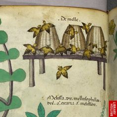 Detail of a miniature of beehives with bees.   Origin:Italy, N. (Lombardy)