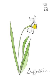 Daffodil  Ink and Watercolor on paper...love the simplicity.