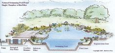 Natural Pool Schematic