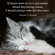 If there were to be a Universal sound depicting peace, I would surely vote for the purr quote by Barbara L. Diamond. Cat Quotes eBook. #Cats #CatQuotes #CatQuoteseBook #eBook