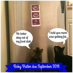 Pregnancy announcement using cats