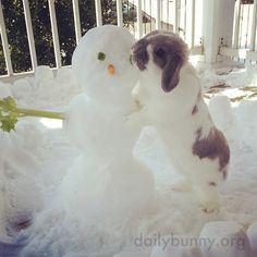 Bunny meets a very delicious snowman