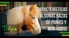 Características de Algunas Razas de Ponis y Mini Horse  - TvAgro por Jua...