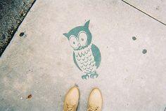 Love this little owl street art.