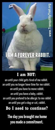 Shelters are over flowing with unwanted bunnies, please adopt, don't shop, and please don't get your children a bunny for Easter if you don't plan on taking care of it for the bunnies entire life.