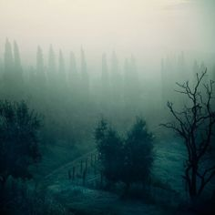 Tuscany Landscape Photograph, Italy, Fog, Trees, Blue, Mysterious, Winter - Into the mystic
