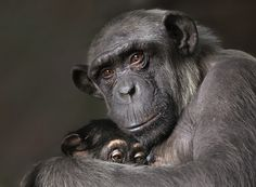 Mother and son by Carles  Just - Photo 4776629 - 500px