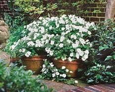 White Flower Garden Design white impatiens