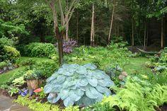 Mid summer garden.  Medford, NJ.