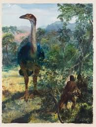 Image result for Dinornis