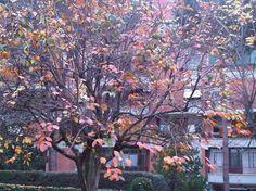 In-sostenibilità. Trova gli intrusi. L'albero ha foglie rosse. I punti verdi sono decine di pappagalli che mangiano i cachi Display, Floor Space, Billboard