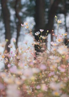 Autumn flowers...... ....... ...... ....... ....... ....