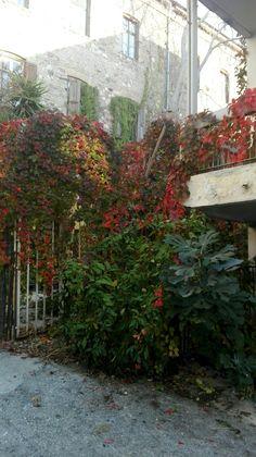 mjt, mytilene, leaves