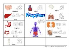 Sign Language Book, Learn Swedish, Swedish Language, School Signs, Just Kidding, Work Hard, Preschool, Teacher, Education
