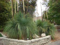 draught resistant plants   drought resistant plants Arboretum