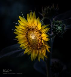 Stay Bright In Your Darkness by paulbarson #nature #photooftheday #amazing #picoftheday