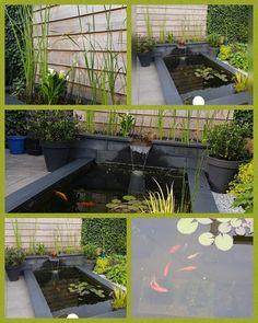 Aquarium, Design, Goldfish Bowl, Aquarium Fish Tank, Aquarius, Fish Tank