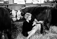 Dennis Stock. USA. 1965. Des Moines. IOWA. Beauty contest for cattle at the Iowa State Fair. Magnum Photos Photographer Portfolio
