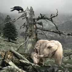 Raven & yak friend.