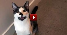 If your cat does any of these things....it may actually be a dog! (So cute...must see!)
