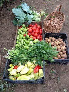 Termelői profil | Microker Celery, Vegetables, Food, Profile, Veggies, Essen, Vegetable Recipes, Yemek, Meals