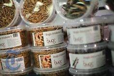 Dutch edible bugs products