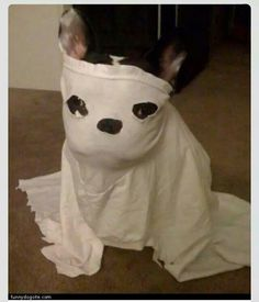 Ghost Frenchie ...