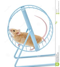 9644e82f37a35d8dd22c63c9311c5fd4--hamster-wheel-royalty-free-stock-photos.jpg
