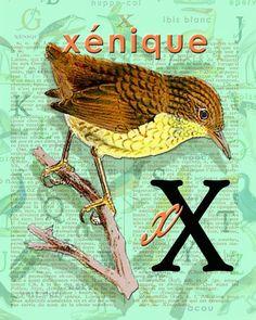 X for XÉNIQUE.Alphabet Ornithology art Decor par BerniesArtPrints