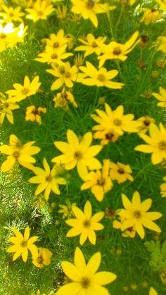 žlutá Plants, Plant, Planets