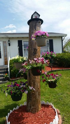 My most awesome Mother's Day Gift from my Husband and Daughter. My husband came up with this awesome idea! Our dead tree, he left the stump, stained it and drilled hooks on the tree for planters. He put a bird house on the top. I have never seen anything so original! Amazing. I am so very blessed!