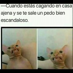ideas for memes divertidos chistes Mexican Funny Memes, Mexican Jokes, Funny Spanish Memes, Spanish Humor, Memes Humor, New Memes, Jokes Images, Funny Images, Funny Pictures