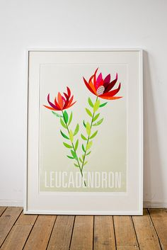 Leucadendron Artist Print by birds & trees, via Flickr