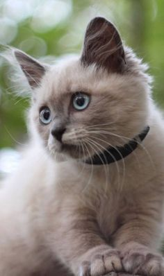 Such an adorable face…. #cats #kittens