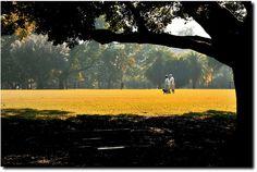 Ibirapuera Park - São Paulo - Brazil, via Flickr.