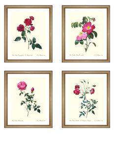 "Set of 4 Rose Prints. Botanical Print Set. Wall Art Print Set. Rose Pictures Set 8x10"""